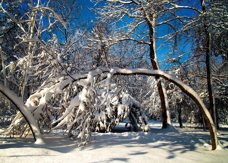 Snöa dolda buskar och filialer på bakgrund för blå himmel fotografering för bildbyråer