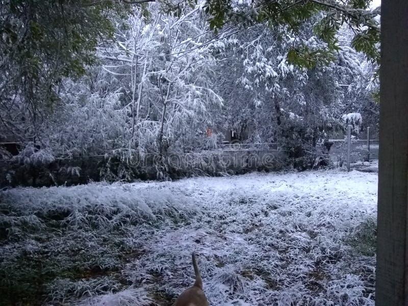 Snöa i Corpus Christi tx royaltyfria bilder