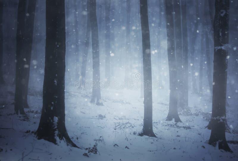 Snöa stormen i en skog med dimma i vinterafton arkivfoton
