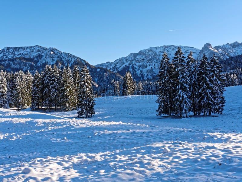 Snöalpina landskaps- och skogsbränder med blått skogspapper arkivbilder
