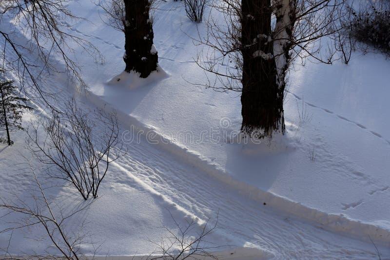 Snöbana i skogen royaltyfri foto