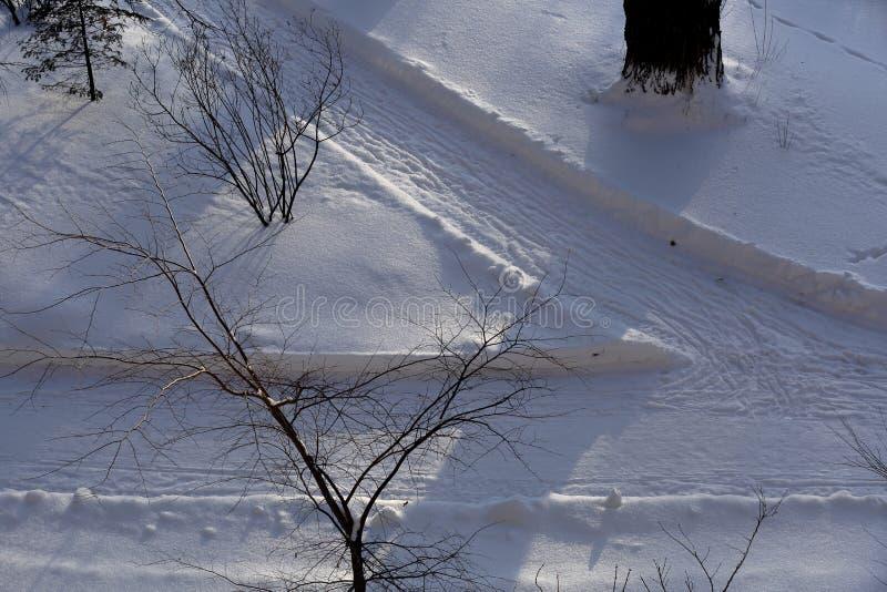 Snöbana i skogen royaltyfri bild