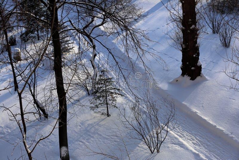 Snöbana i skogen fotografering för bildbyråer