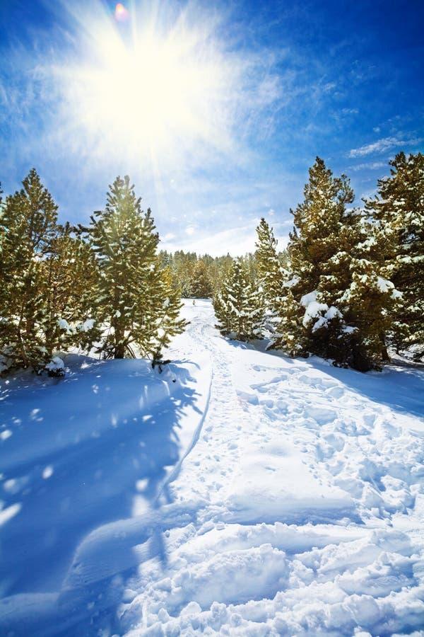 Snöbana i snöig bergskog royaltyfri foto