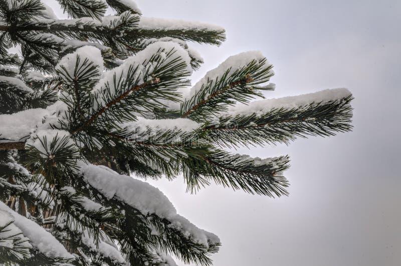 Snöcoverden sörjer filialen arkivbild