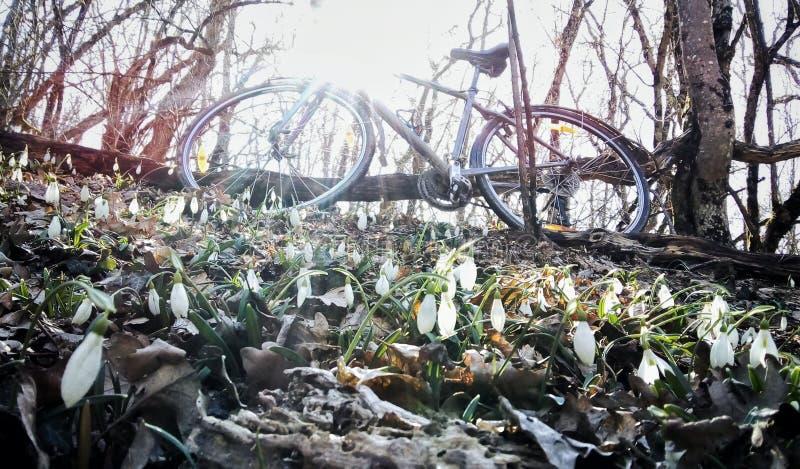 Snödroppefält Cykel i bakgrunden royaltyfria foton