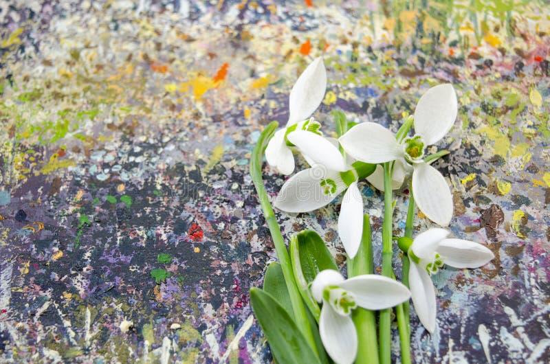 Snödroppen blommar på en färgrik bakgrund arkivfoto