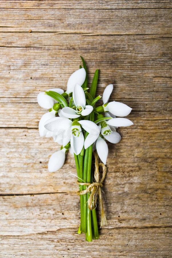 Snödroppen blommar på lantlig träbakgrund royaltyfri fotografi