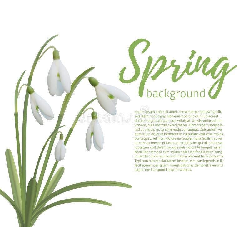 Snödroppen blommar på vit stock illustrationer