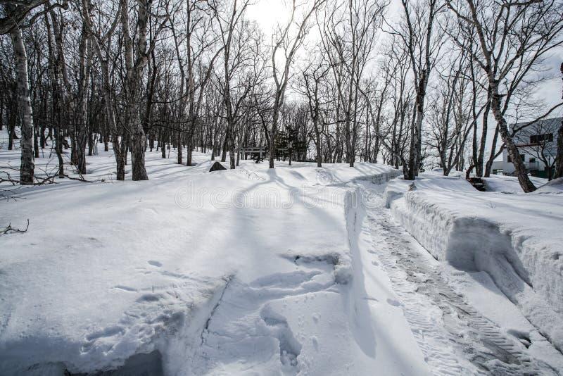 Snöfält på det Otaru berget, Hokkaido, Japan royaltyfri bild