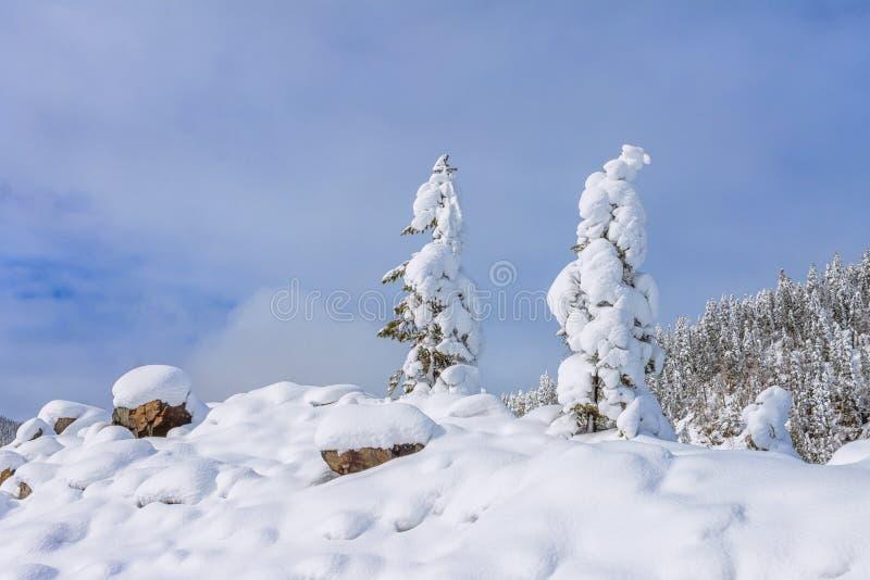 Snöfältet av berglutningen med frostigt sörjer överst träd på bakgrunden av taigaskogen och kullar under blå himmel arkivbild