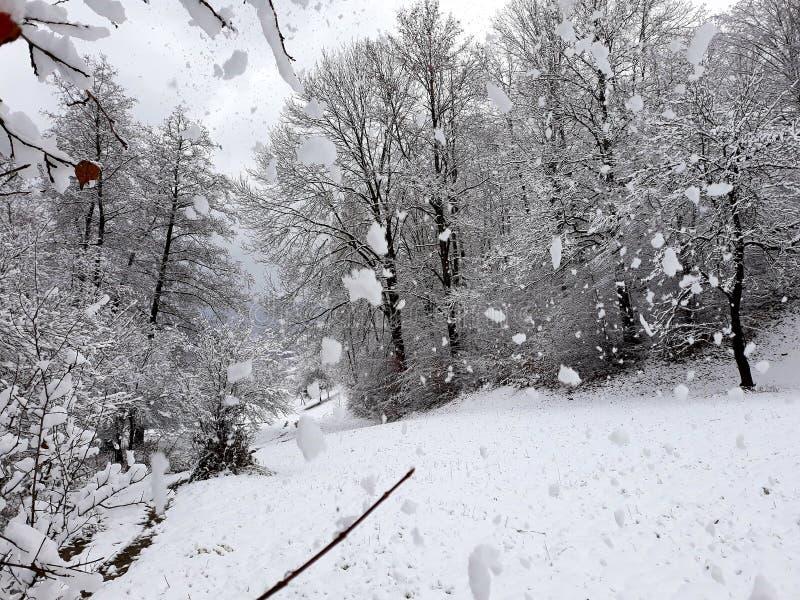 Snöfall i trä royaltyfri bild