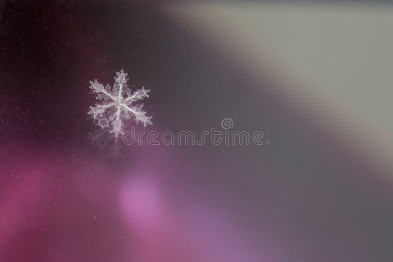 Snöflinga fotografering för bildbyråer