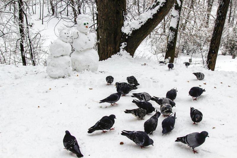 Snögubbepar i vinterskogen som göras av handen En flock av duvor som pickar korn i snön fotografering för bildbyråer