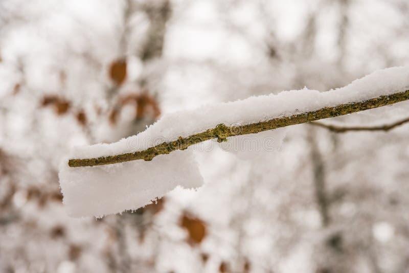 Snöhatt på en filial av ett träd arkivfoton