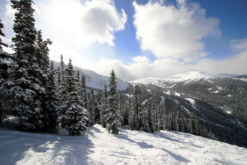 snöig alpin skog royaltyfri fotografi
