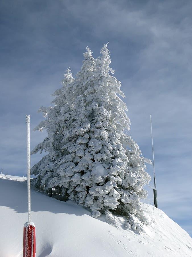 Snöig alpint träd royaltyfri foto