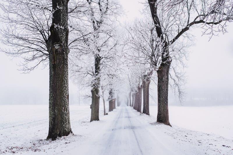 Snöig Bana Som Omges Av Det Kala Trädet Gratis Allmän Egendom Cc0 Bild