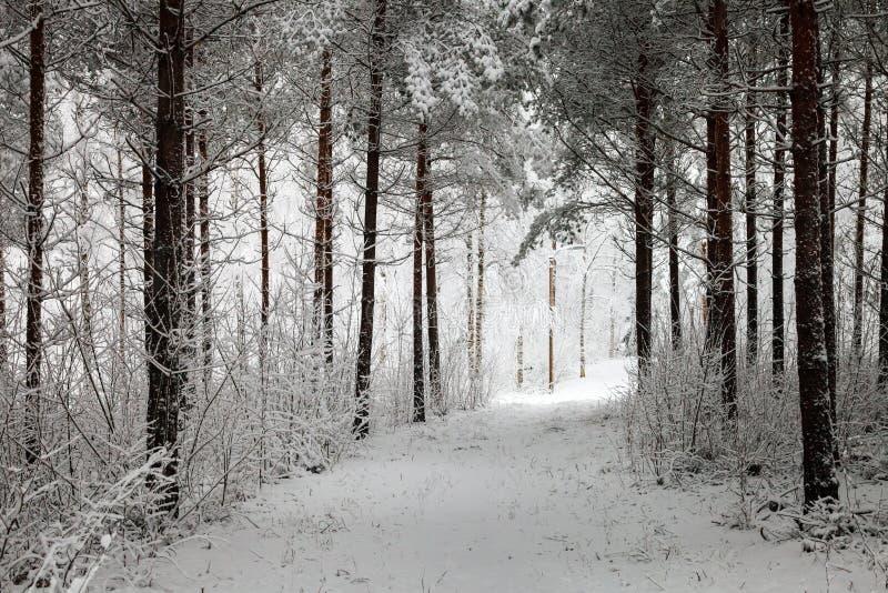 Snöig bana till och med den vintriga skogen royaltyfri bild