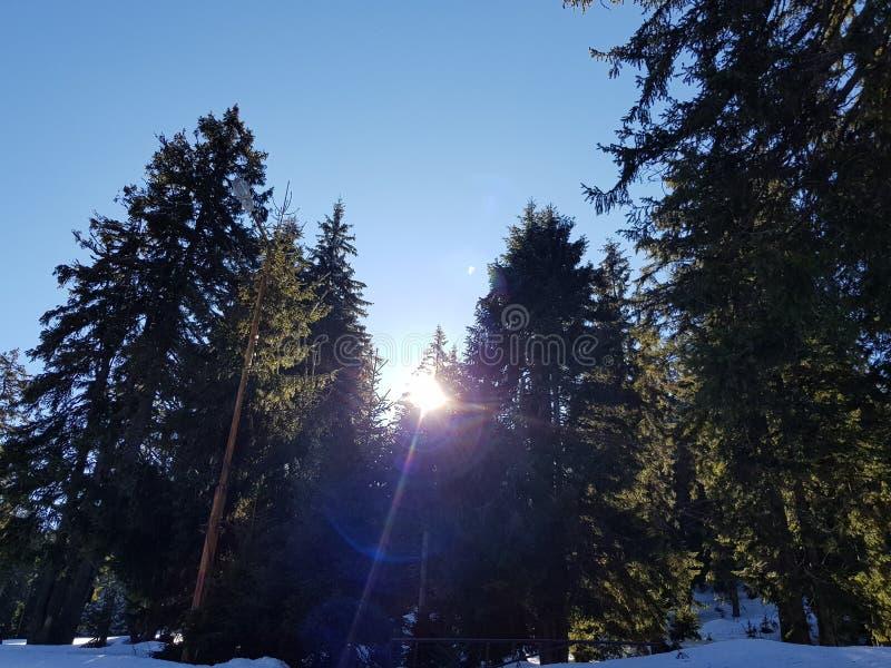 Snöig bergskog arkivbild