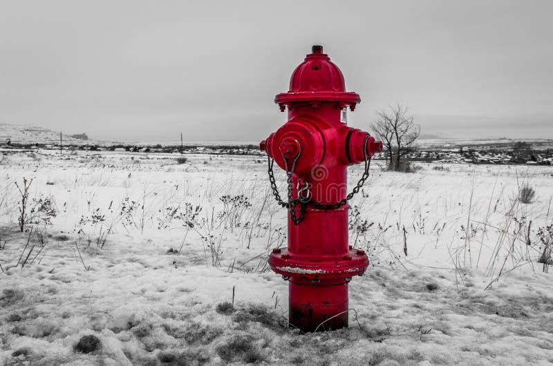 Snöig brandpost fotografering för bildbyråer