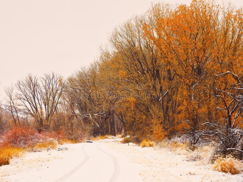 Snöig färg i Februari royaltyfri fotografi