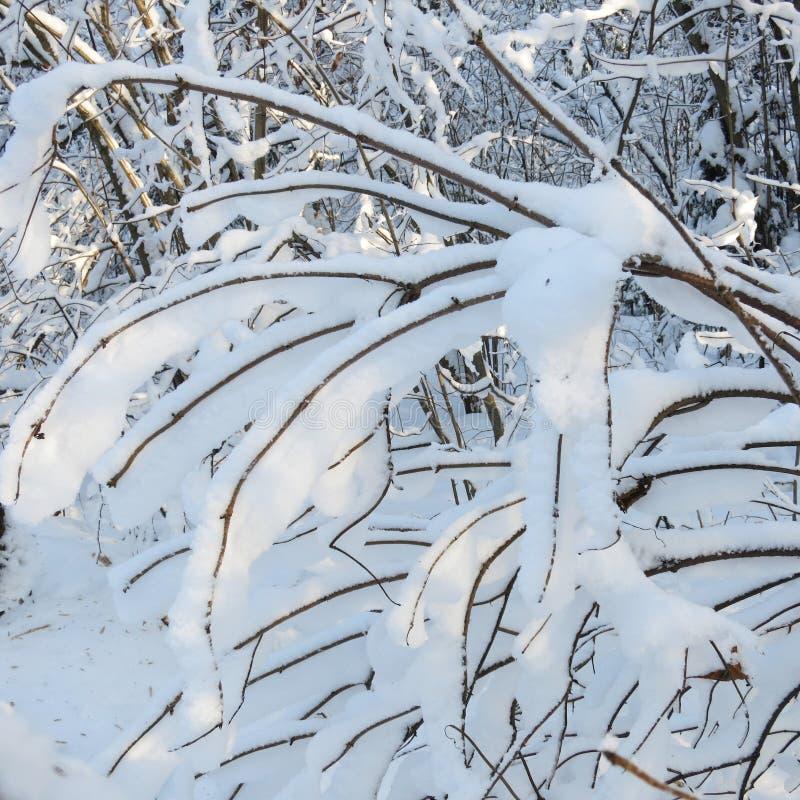Snöig förgrena sig arkivbild