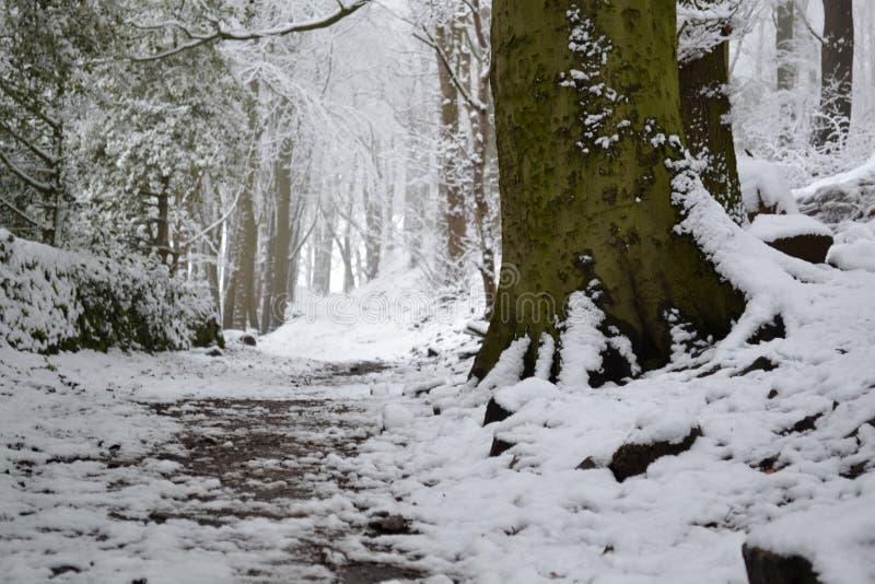 Snöig Forest Floor royaltyfri bild