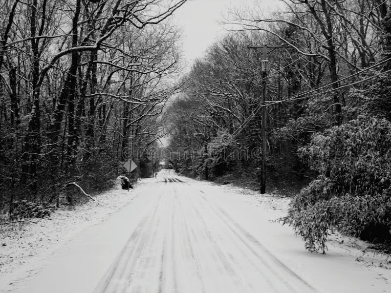 Snöig Forrest arkivfoto