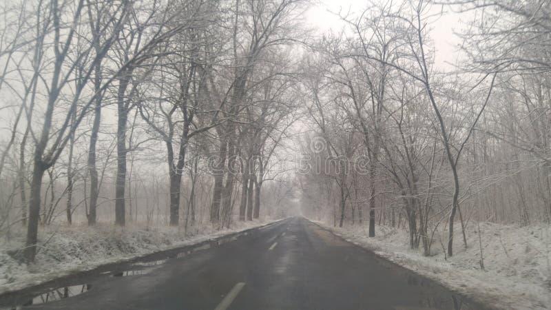 Snöig frostig väg för nordisk vinter med skoglandskapbakgrund Nordligt härligt sörjer upp flyg- sikt under snödagtid Lapl royaltyfri foto