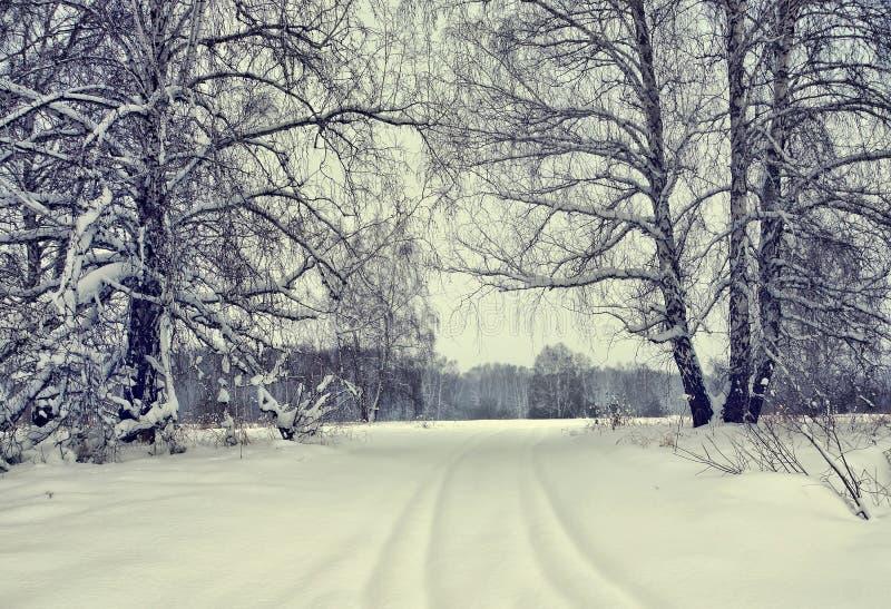 Snöig gränd i en vinterbjörkskog royaltyfri fotografi