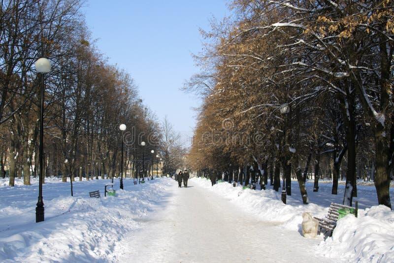 Snöig gränd i staden med lyktor och bänkar som strilas med snö royaltyfri foto