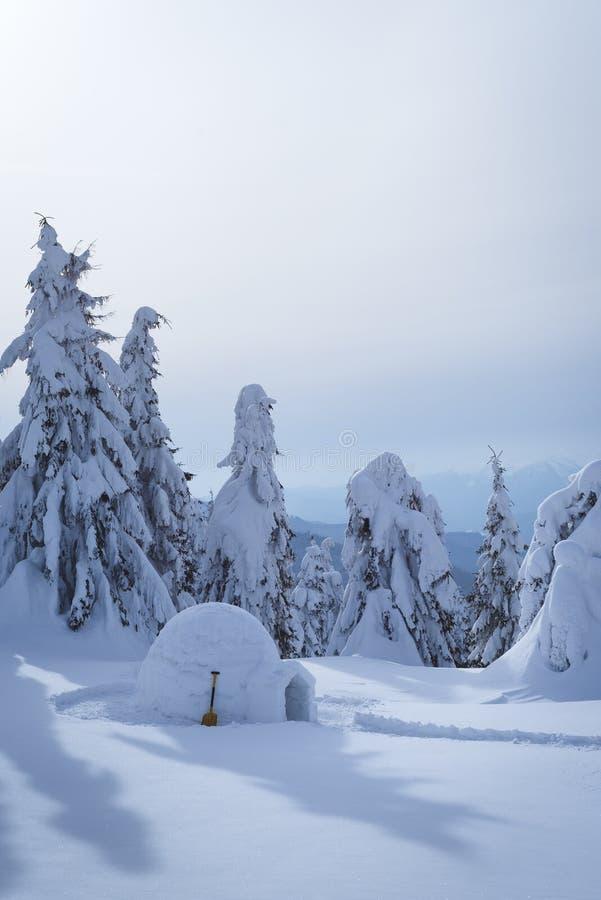 Snöig igloo i vinterskog royaltyfria bilder