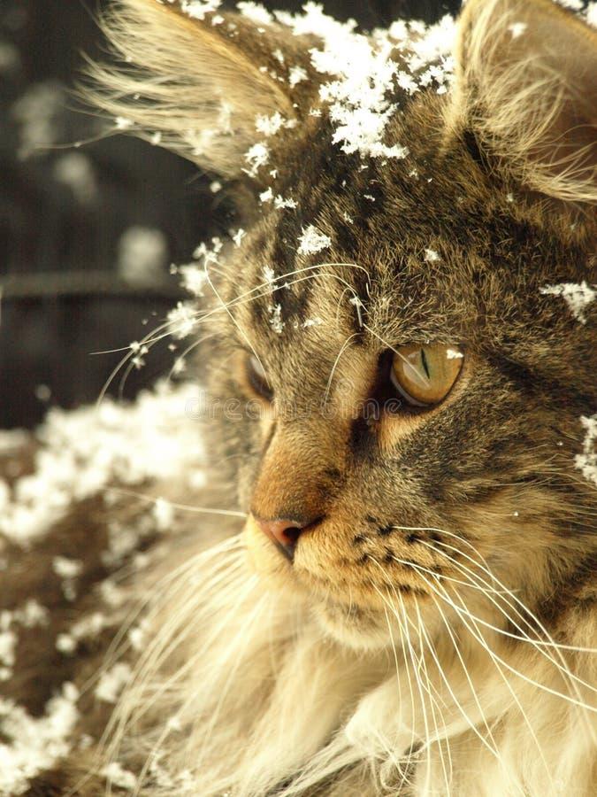 snöig katt royaltyfri foto
