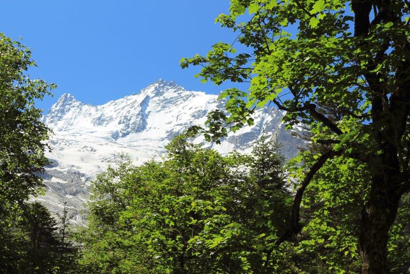 Snöig Kaukasus berg och grön skog under royaltyfria bilder