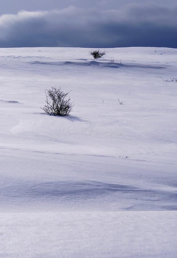 Snöig kull arkivbild