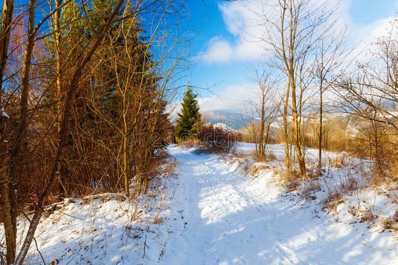 Snöig landskap för härligt berg och skogbana Härlig solig dag i bergen royaltyfri bild