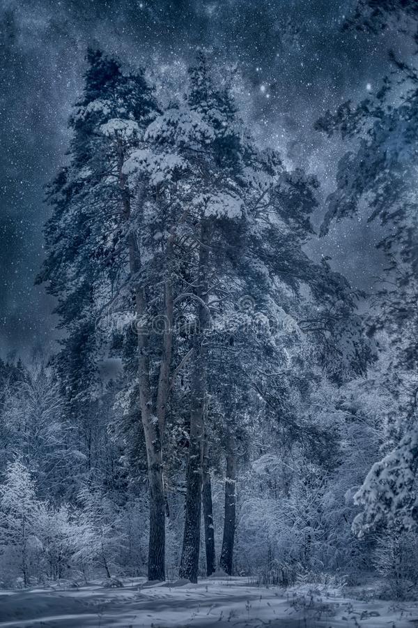 Snöig landskap för vinter på den soliga dagen