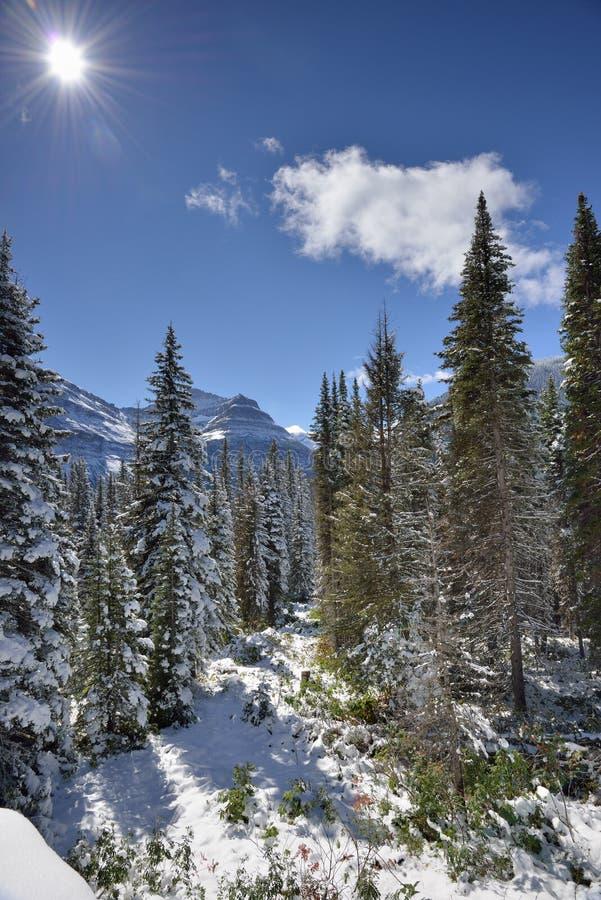 Snöig landskap i glaciärnationalpark royaltyfri bild