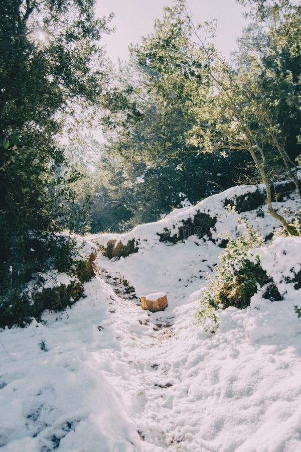 Snöig landskap i mitt av naturen royaltyfria foton