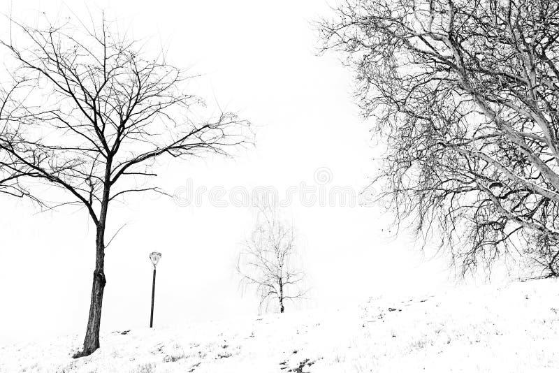 Snöig landskap med träd i svartvitt arkivbilder