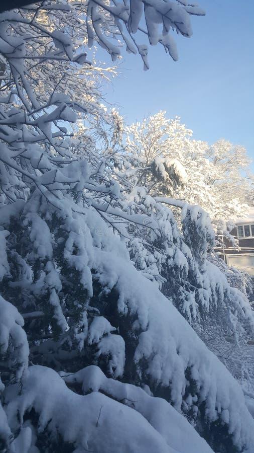 Snöig morgon fotografering för bildbyråer