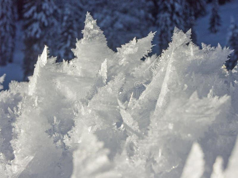 Snöig och iskalla under av naturen royaltyfri foto