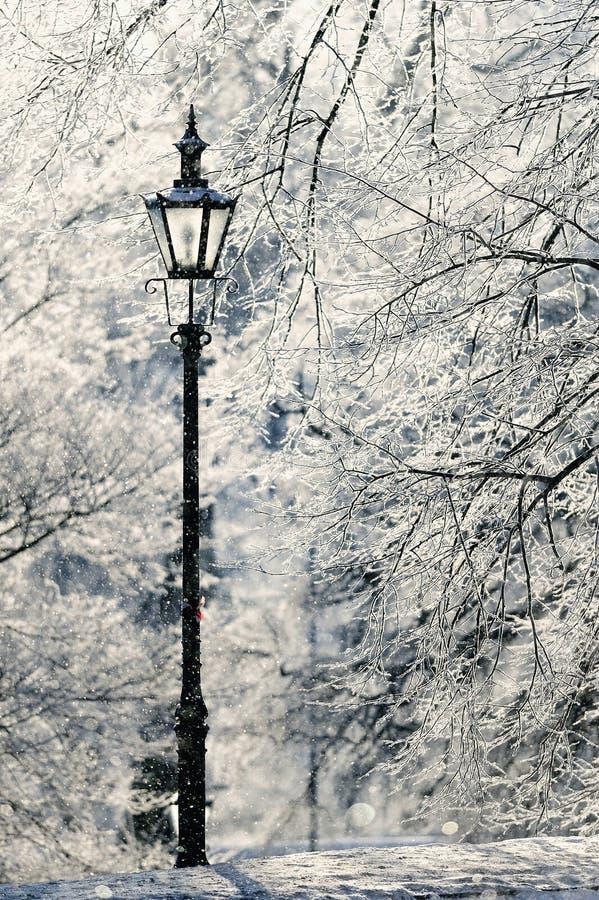 Snöig Park royaltyfri fotografi