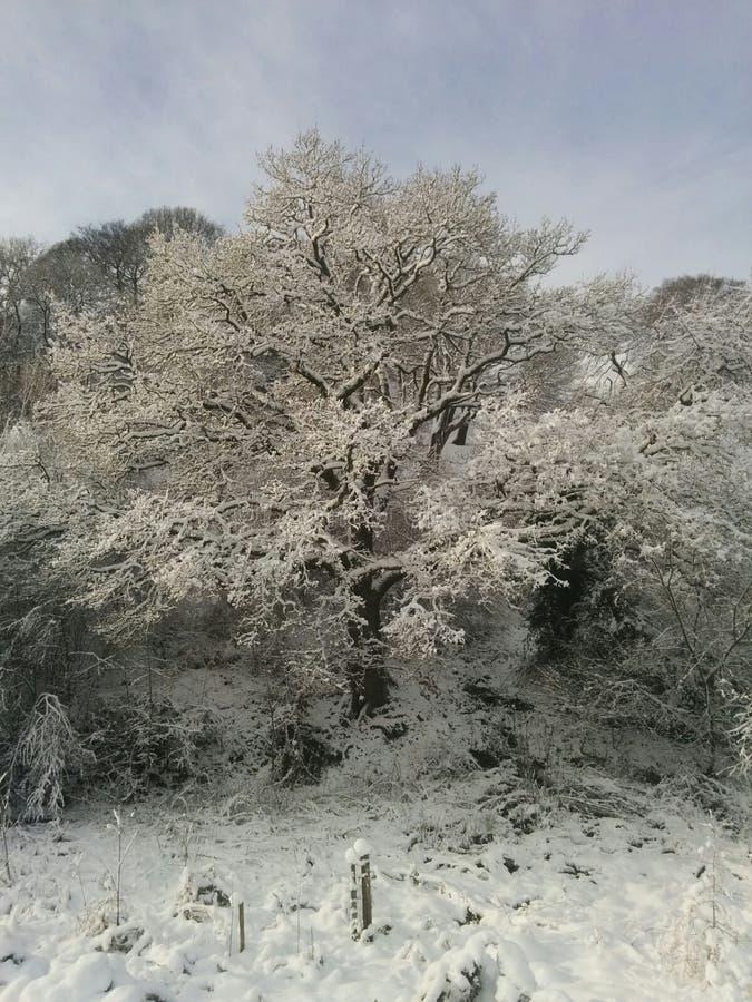 Snöig plats arkivfoto