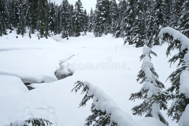 Snöig plats från slingor för monteringsSeymour snösko arkivbild