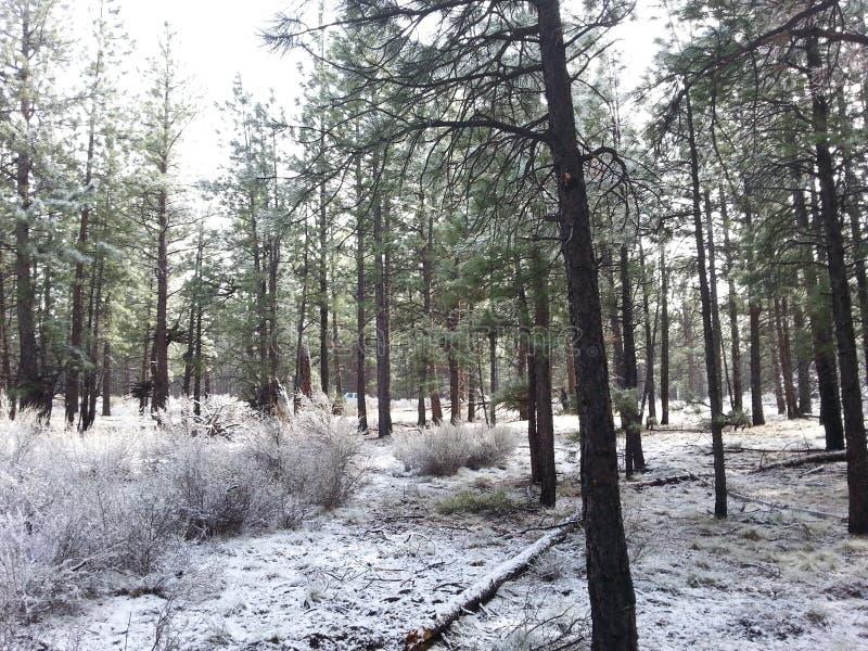 Snöig porslinhatt i krökningen oregon fotografering för bildbyråer