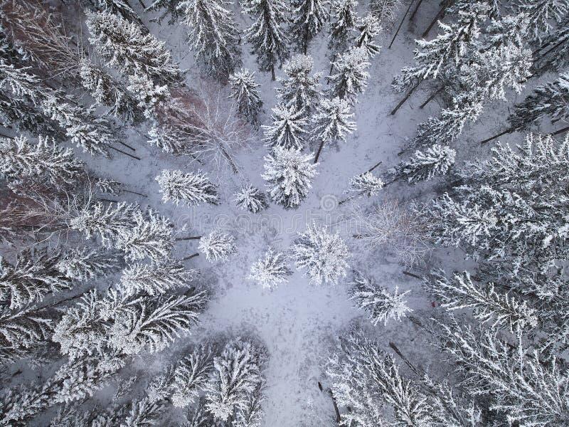 Snöig skogöverkant-ner-sikt royaltyfria bilder