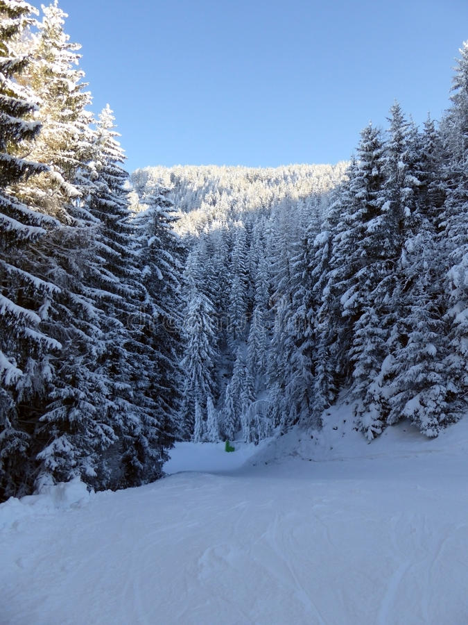 Snöig skog i österrikiska fjällängar royaltyfri fotografi