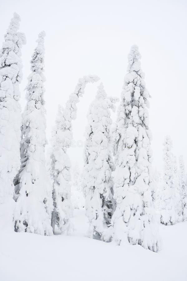 Snöig skog i Lapland, Finlanc royaltyfri fotografi